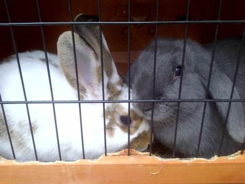 House bunnies