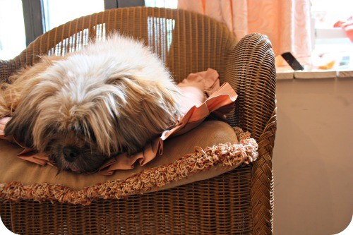 Heartfelt's resident pup