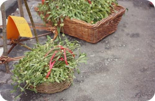 Mistletoe for sale